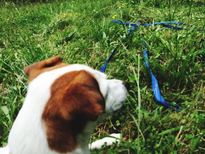 Harnes Loop Collar Dogs Pets Pets Corner Leash Pet Photography  long leash makes a Bow Better Together