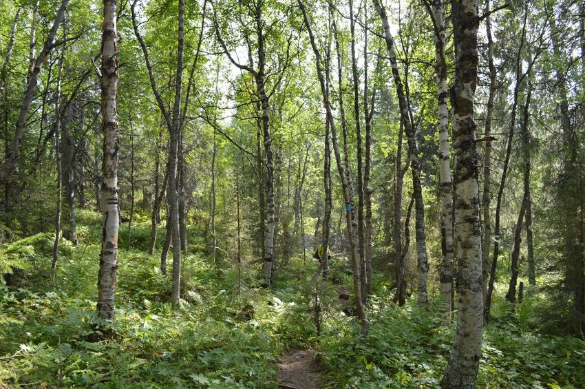 Beauty In Nature Day Forest Growth Nature No People Outdoors Plant Tranquility Tree WoodLand