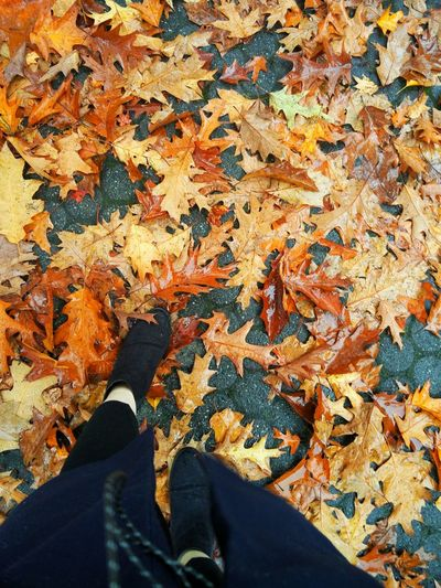 Oneplustwo Autumn Color After Rain true colors after rain. Can't love Autumn any more
