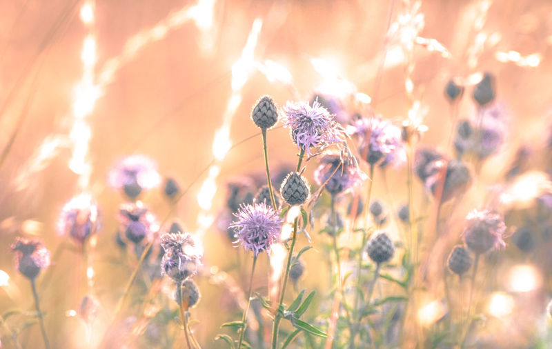Animal Animal Themes Animal Wildlife Animals In The Wild Beauty In Nature Close-up Flower Flower Head Flowering Plant Fragility Freshness Growth Insect Invertebrate Lavender Nature No People One Animal Outdoors Petal Plant Pollination Purple Vulnerability