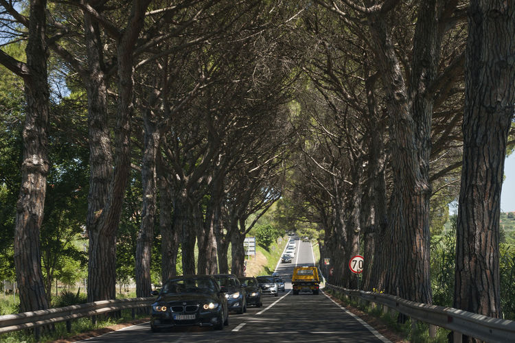 Street amidst trees in forest
