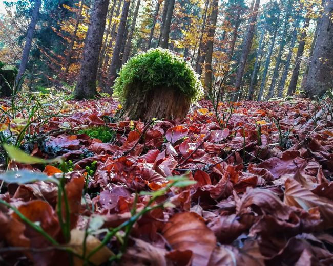 Plants growing in forest during autumn