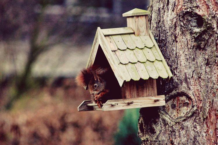 Squirrel in birdhouse