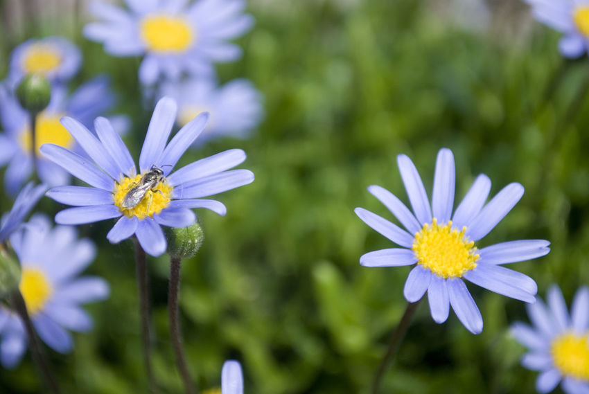 Animal Themes Beauty In Nature Close-up Day Flower Flower Head Flowering Plant Focus On Foreground Fragility Freshness Growth Inflorescence Invertebrate Nature No People Petal Plant Pollen Pollination Purple Vulnerability