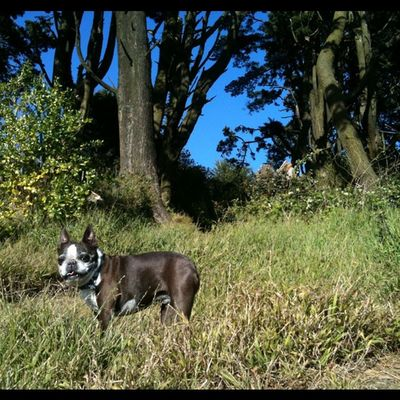 Miss my walks with Rogue in the park.