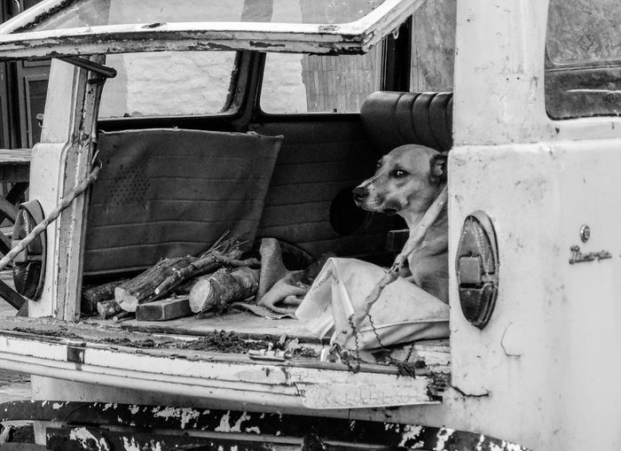 Close-Up Of Dog In Abandoned Vehicle
