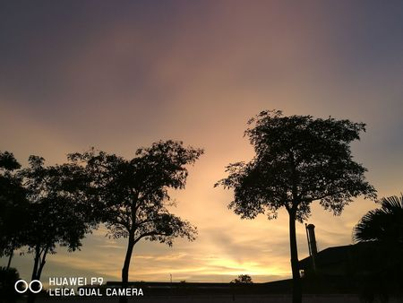 Silhouette Sky Copy Space Tree Sunset No People Outdoors Tranquility Night Nature Scenics Low Angle View Landscape Beauty In Nature