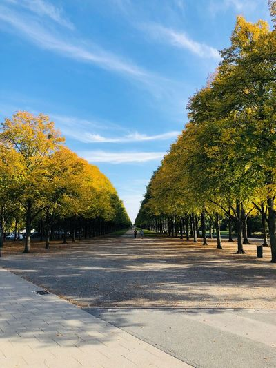 Autumn at Georgengarten Tree Plant Sky Nature Sunlight Day Cloud - Sky No People Growth Beauty In Nature Shadow Road Park Outdoors Tranquility Scenics - Nature Land Tranquil Scene Field Landscape