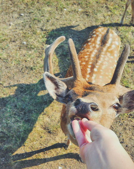 Such cute animals ☺️💕🍃 Beauty In Nature Photography Themes Nature Forest Animal Themes Animal Animal Eyes Fawn😍