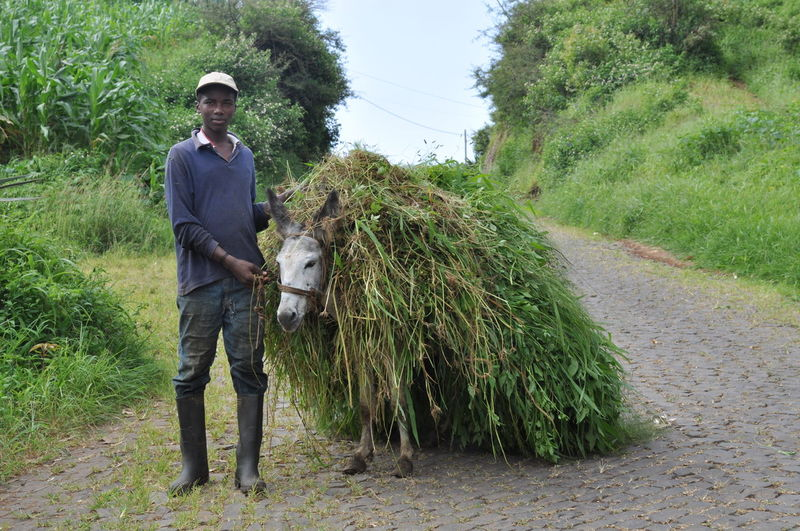 farmer boy in Rui Vaz Adult Adults Only Carrying Day Farm Worker Farmer Full Length Growth Looking At Camera Man At Work Manual Worker Nature One Man Only One Person Only Men Outdoors People Responsibility Rural Scene Standing Travel Destinations Tree Working Africa Break The Mold
