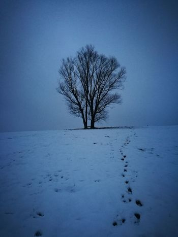 Footprints Far Distance Tranquil Scene Tranquility Slovenia FAR AWAY Alone... Calmness Idyllic Snow ❄ Winter Cold Temperature Snow Bare Tree Tree Landscape Frozen Blue Beauty In Nature Nature Outdoors Day No People Branch Sky