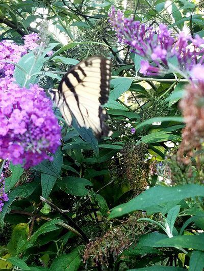 Butterfly ❤