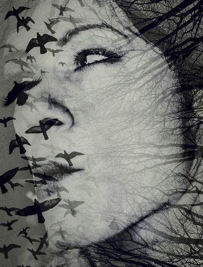 Close-up of birds against sky