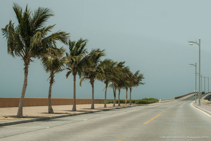 Marina Dubai Road Transportation Tree Road Marking Marking Symbol Direction Palm Tree The Way Forward Plant Sign Street Tropical Climate Sky Nature No People Street Light Day Diminishing Perspective Clear Sky Outdoors Treelined Dividing Line
