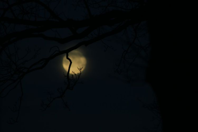 my view at work this morning😍 Early Mornings Aftermath Bloodmoon2018 Branches Branches And Moon Canon_photos Canon EOS 70D Canonphotography Capture The Moment Canon 70d No Filter, No Edit, Just Photography From My Point Of View No Tripod Pure Photography Eyemphotography Eyem Best Shots Trough The Trees Tree Night Silhouette Spooky Branch Nature Horror Outdoors Moon Bare Tree Beauty In Nature No People Sky