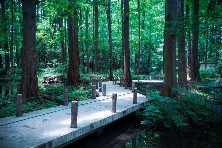 杨公堤 Tree Forest Green Color No People Outdoors Tree Trunk Nature Day Beauty In Nature