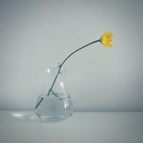 Marguerite Daisy Flower Stillife Minimalism The Minimalist Little Things EyeEm Flower Yellow Flower Yellow