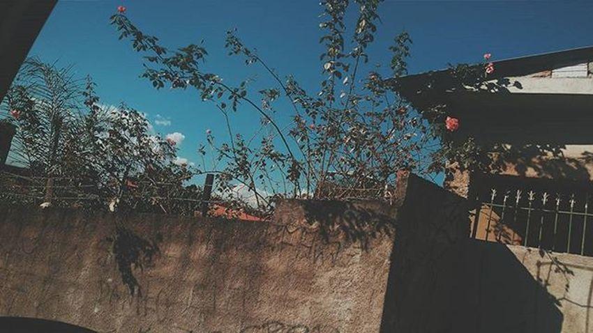 Vscocambr Vscocam VSCO Vscogood VSCOPH Vscocambrasil Vscocambrazil VscoBr Vscobrazil Vscobrasil Vscoday Vscodaily Vscoflowers Vscocamflowers Flowers Brasil