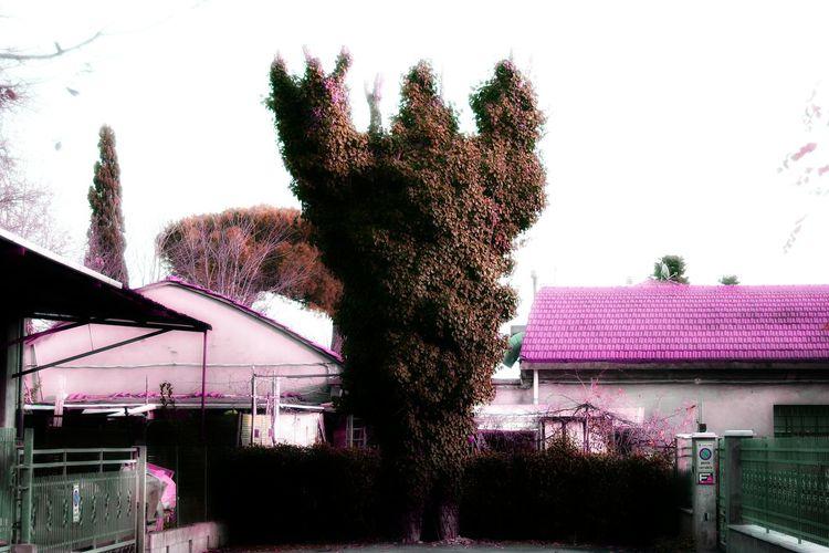 Uomoalbero Reginadicuori Heartqueen Outdoors Treeman Bizzare Bizzarro Urban Street Strada Albero Tree