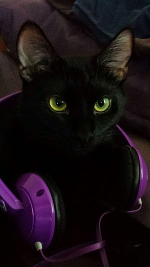 Listening to CATS Olliekitteh