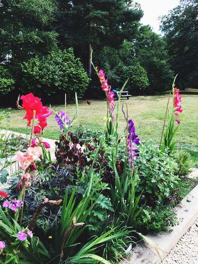 Summer Garden Flowers,Plants & Garden Sneaky Chicken