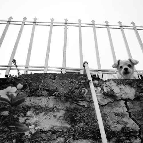 HiFiPhotographia HIFiClaudioVRocha Blackandwhitephotography Blancoynegro Pretoebranco Blackandwhite Noiretblanc 39 Pets