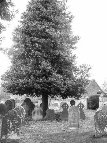 Blackandwhite Black And White Photography Graveyard Beauty Tree