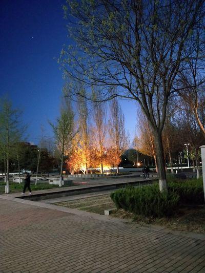 Tree City Bare Tree Illuminated Sky