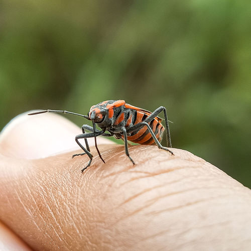 Close-up of insect on finger