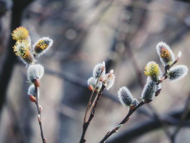 Plax! Pompom Plants And Flowers #branches Coldweather Flower Nature Plant Beauty In Nature Flower Head Tranquility Focus On Foreground Freshness Fragility Place Of Heart Growth Outdoors Close-up