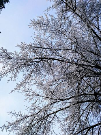 Tree in Snow Winter Snow Trees Tree Cold January 2017 Branches Sky