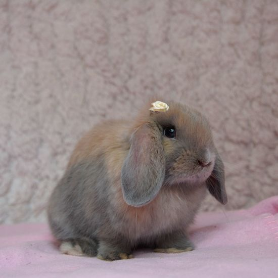Animal Themes Animals In The Wild Bunny  Close-up Day Domestic Animals Hamster Indoors  Mammal No People One Animal Pets Pink Color Rabbit Rodent
