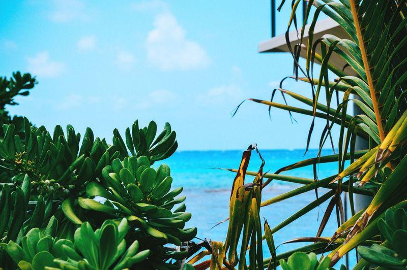 Hanauma Bay Hawaii Oahu Travel Photography