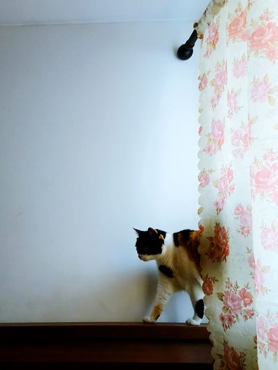 Le chat! Domestic Cat Pets One Animal Domestic Animals Animal Themes Indoors  Feline Mammal No People Home Interior Hanging Portrait Domestic Room Sitting Day Pet Portraits The Week On EyeEm