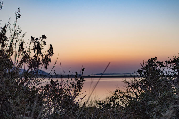 Plants By Seascape During Sunset