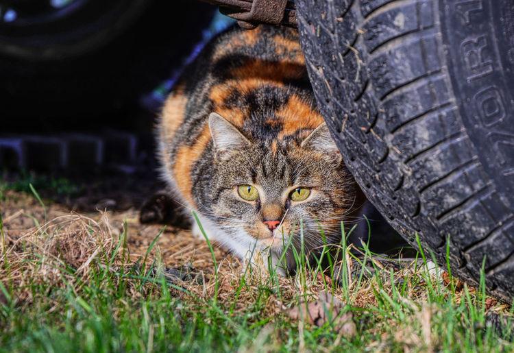 Cat looking away in a car