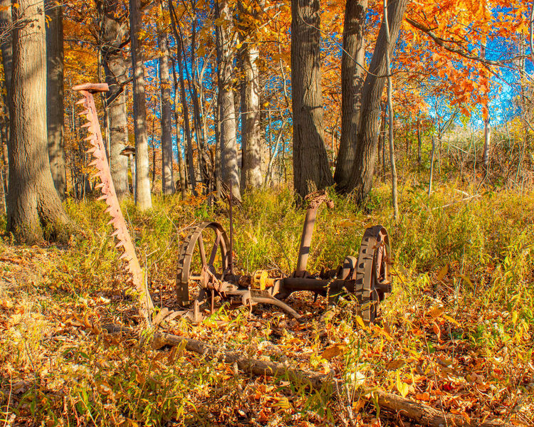 Autumn Autumn colors Autumn Leaves Fall Colors Fall Fall Leaves Nature Day No People Changing Seasons Outdoors Trees Orange Color Forest Tree WoodLand Non-urban Scene Farm Machinery Antique Farm Machinery Antique Farm Equipment Grass