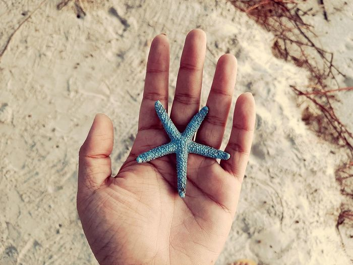 Human Hand Sea Life Beach Sand Palm Holding Personal Perspective Human Finger High Angle View Starfish