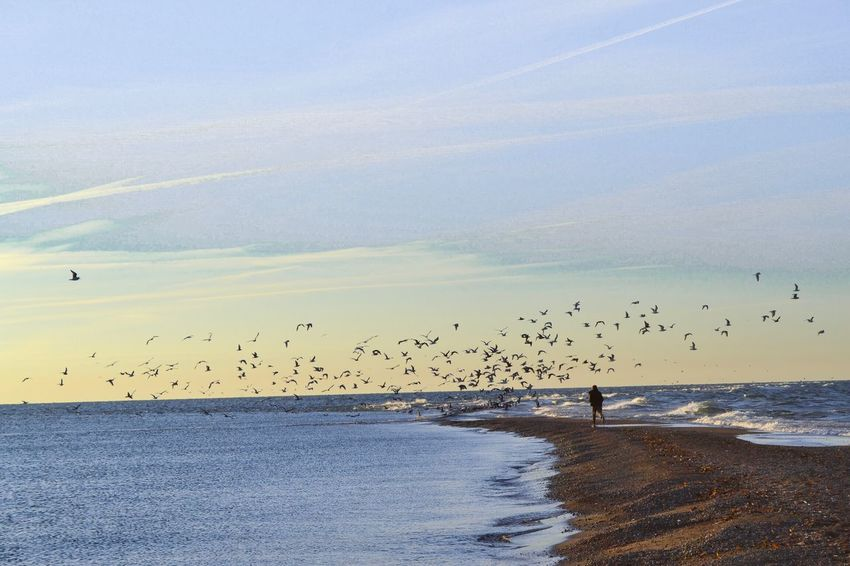 Sea Water Sky Scenics Beauty In Nature Nature Beach Flying Run Bird Photography Horizon Over Water Birds Large Group Of People Real People Outdoors Bird Sunset Large Group Of Animals Animals In The Wild Flock Of Birds Vacations Animal Themes Day