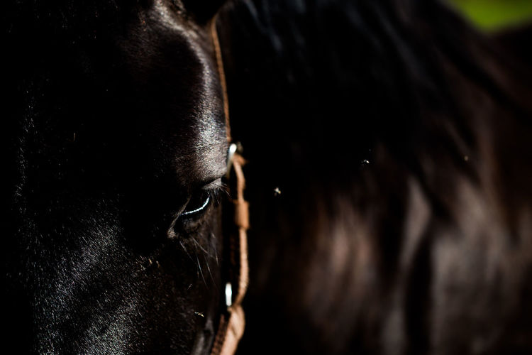 Dark horse Close-up Day Domestic Animals Eye Horse No People One Animal Outdoors