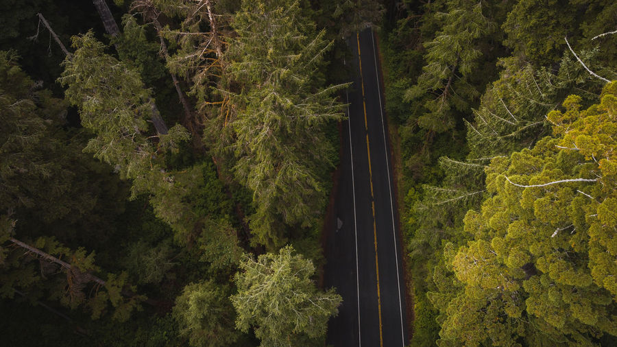High angle view of mountain road amidst trees in redwood forest california national park