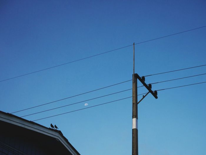 Winter clear sky and couple of starling birds on the roof top Togetherness Winter Sky Photography Couple Dawn Rooftop Blue Sky Moon Bird Electricity  Pole Country House Power Line  Above EyeEmNewHere