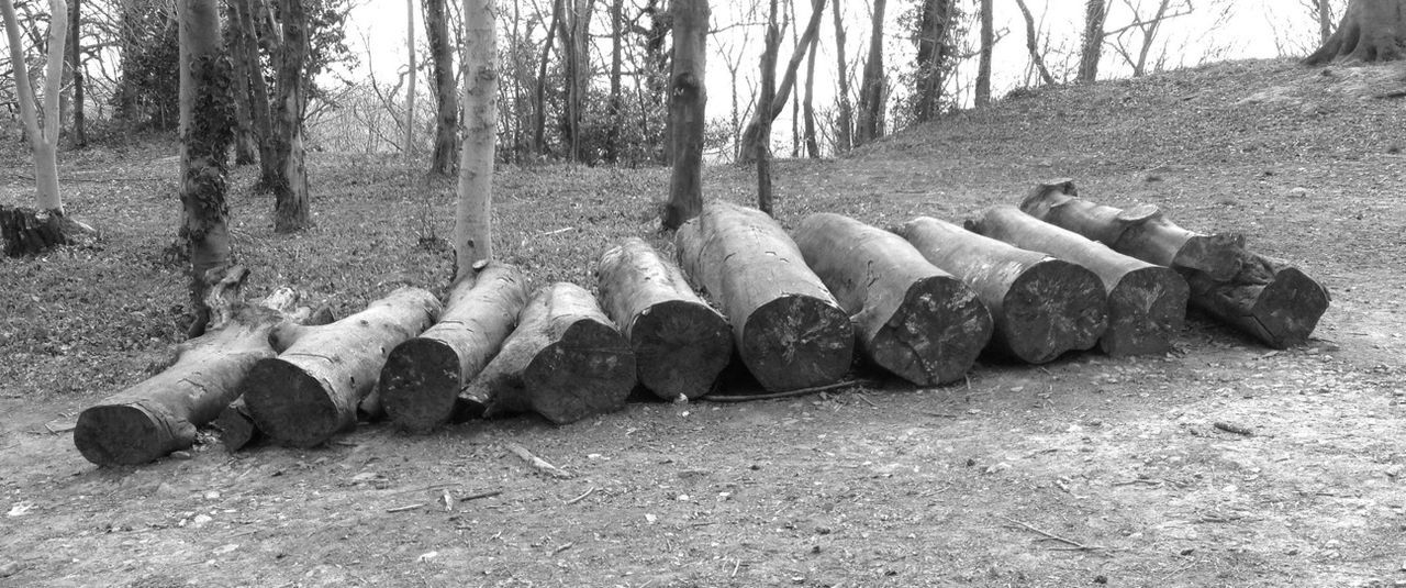 tree, pipe - tube, tree trunk, day, no people, outdoors, nature
