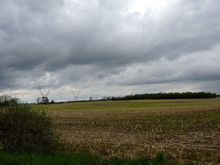 Field Sky Cloud - Sky Environment Landscape Land Tranquil Scene Plant Beauty In Nature Tranquility Scenics - Nature Agriculture Rural Scene Nature Day Growth No People Tree Overcast Outdoors
