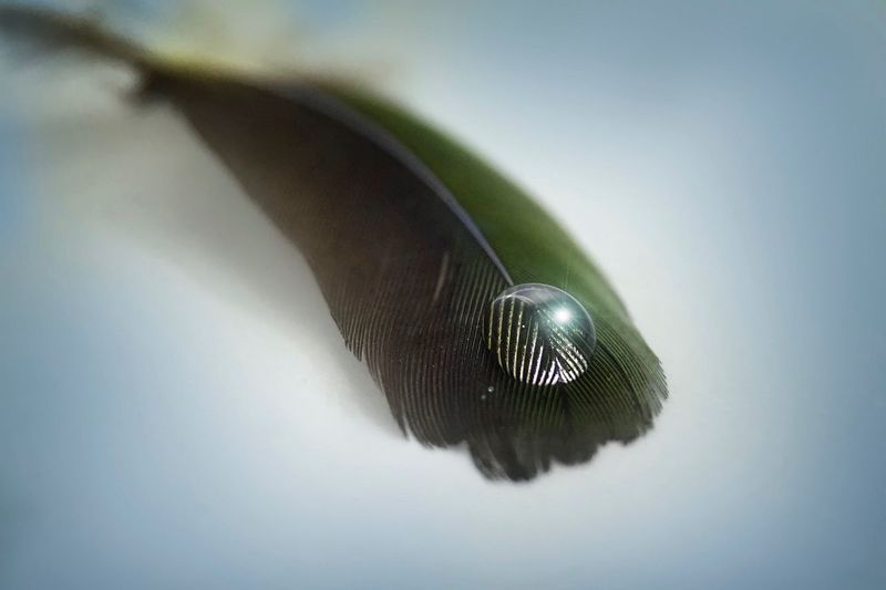 Feather  Drop