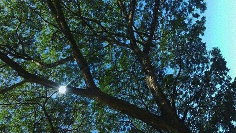 Mothernature. VSCO Vscocam Vscolife Vscolove Vscophile Vscofilter Vscoedit Vscomalaysia Photographysouls Photographyislife