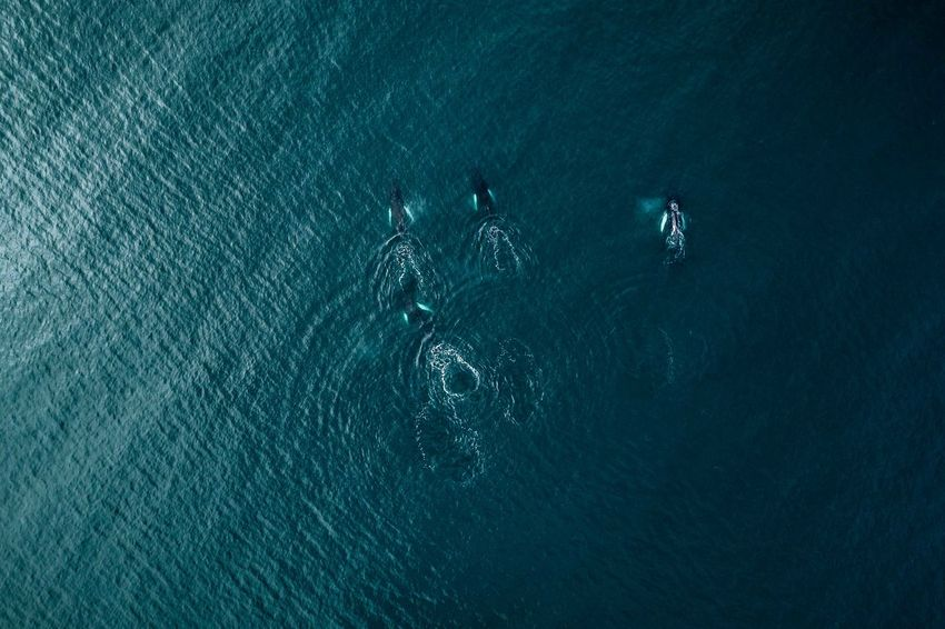 Whales from above in Iceland The Great Outdoors - 2018 EyeEm Awards Beauty In Nature Day High Angle View Marine Men Motion Nature Outdoors People Real People Rippled Sea Swimming Tranquil Scene Tranquility Turquoise Colored Underwater Unrecognizable Person Water Waterfront