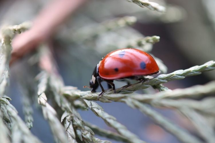 Happy Ladybug 🍀🍀🍀 To My Friends That Connect EyeEm Nature Lover Connected With Nature Nature Happiness