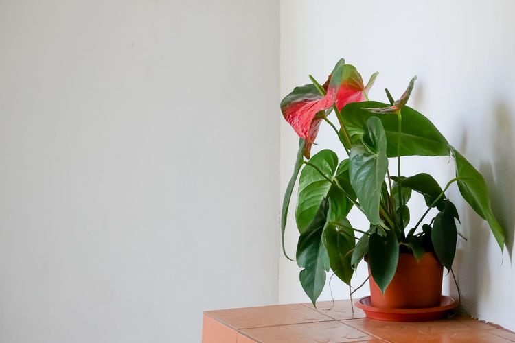 Plant Leaf Plant Part Nature Beauty In Nature Green Color Indoors  Potted Plant Flowering Plant Freshness Growth Copy Space Red No People Flower Fragility Vulnerability  Petal Table Close-up Flower Head Glass Flower Pot Houseplant