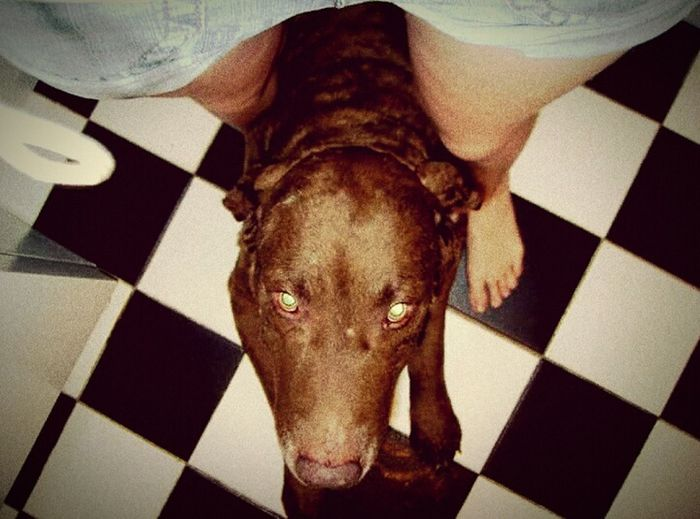 Oldpicture That's Me Doglover Bottle Fed Baby All Grown Up Pure Love Dog Life Dog Love Puppy Face Chesapeake Bay Retriever Big Smile Big Baby My Shadow Big Dog Point Of View Different Perspective Grainy Images Ventage Vintage